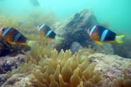 火热家国情铸造海洋生态梦