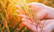 经济日报:抓住乡村振兴的着力点 提升农业农村发展质量
