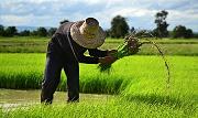 求是网:我国农村改革取得哪些成就