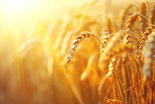 With harvest festival, China eyes more than bumper harvests